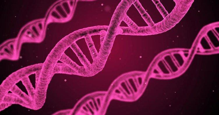 Bütün vücudu kendi kendine yenileyebilen bir gen keşfedildi