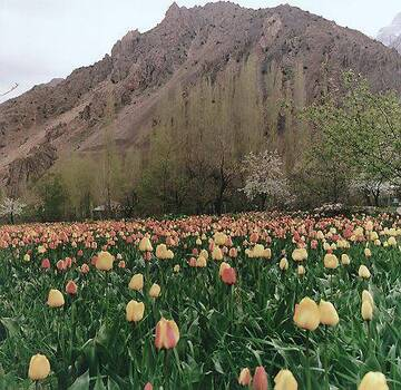 Ambienti naturali  Iran  Asia meridionale  Asia  Paesi  Home  Unimondo