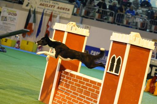 L'agility dog: una sinergia speciale tra uomo e 4 zampe