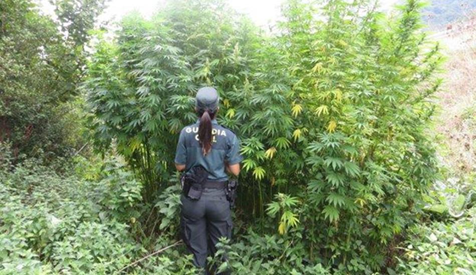 Entrevista a UnionGC sobre el aumento de las incautaciones de marihuana