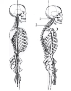 Tmj Helpful Exercises For Tmd And Jaw Pain Union Physical Therapy