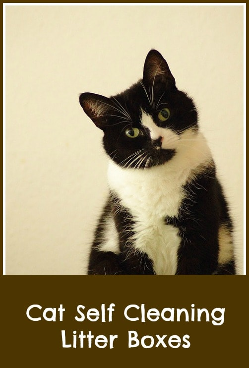 Cat self cleaning litter boxes