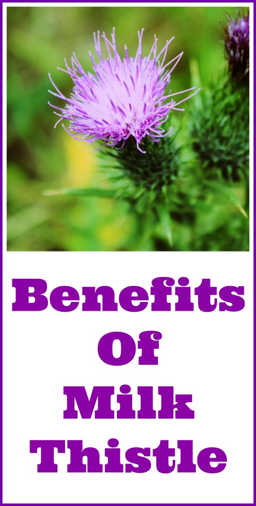 benefits of milk thistle supplements