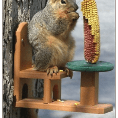 Squirrel Feeder Chair Wheel In Delhi Feeders That Last A Lifetime | Unique Birdhouse Boutique