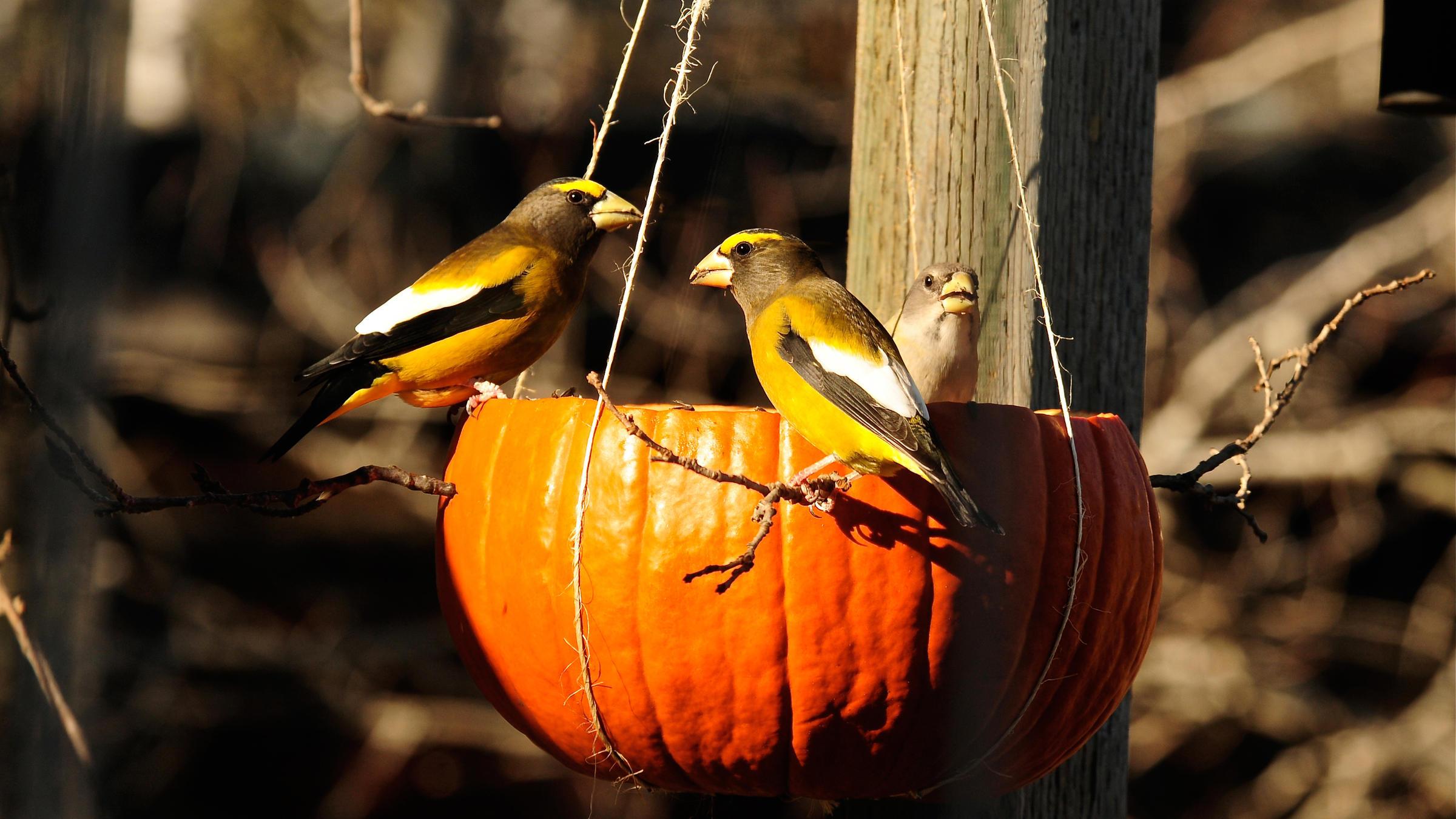 Fall Bird Feeder Wallpaper Hopper Bird Feeder Unique Birdhouse Boutique