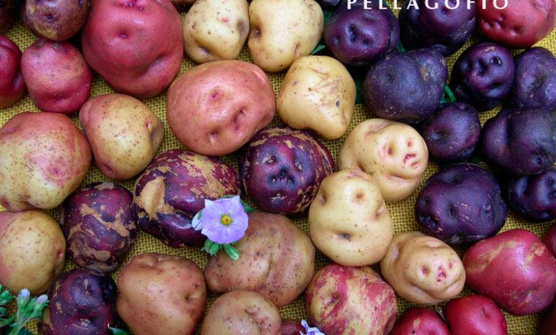 papas de color 41 1 780x470 1 Călătorie și gastronomie: cartofii antici canarieni