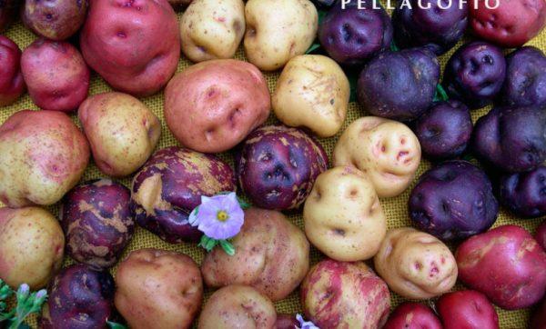 Călătorie și gastronomie: cartofii antici canarieni