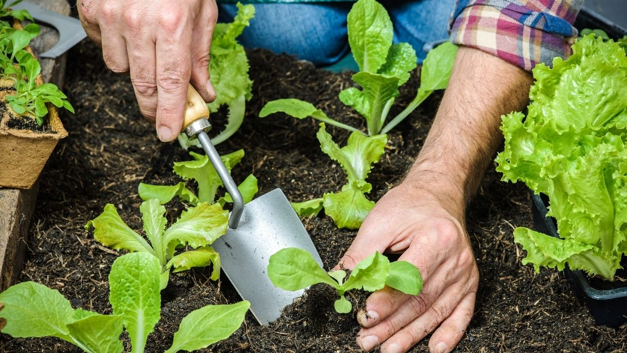 How to Plant a Vegetable Garden?