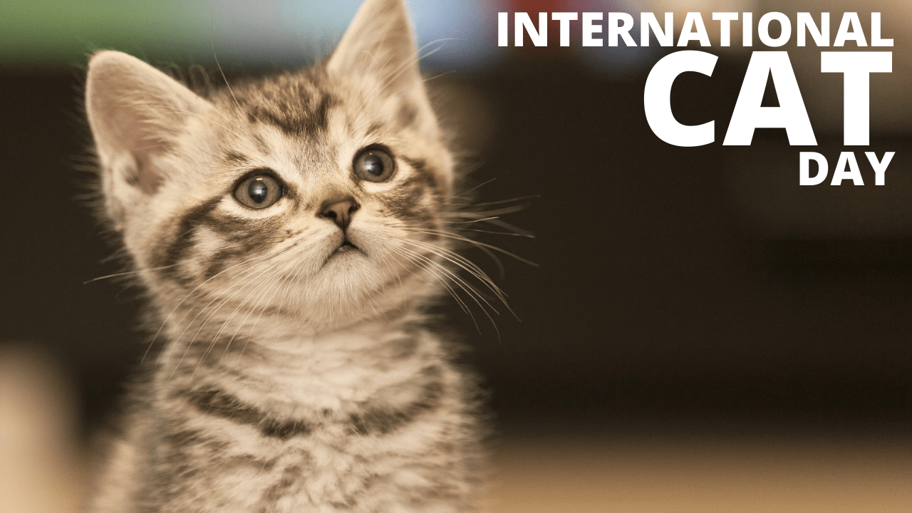International Cat Day 2021 Date, Theme, History, Significance, Celebration, Facts, Activities, and More