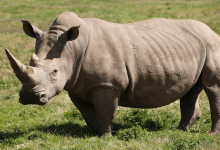 World Rhino Day 2021 Theme, History, Significance, Importance, Activities and Facts