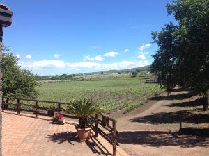Sicily winery - sicily wine safari