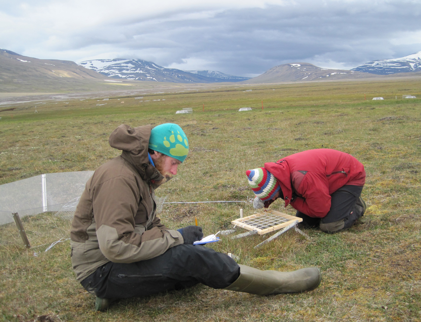 Linking plant nutrient dynamics and ecosystem processes in a warmer Arctic