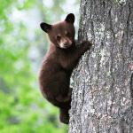 baby bear small