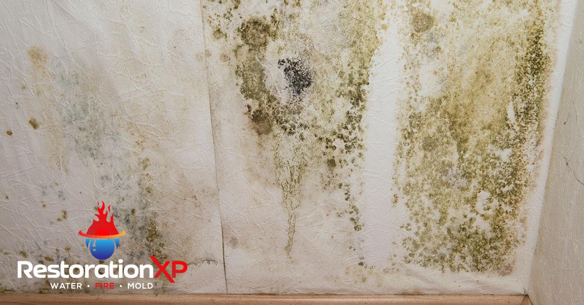 Certified mold mitigation in McKinney, TX