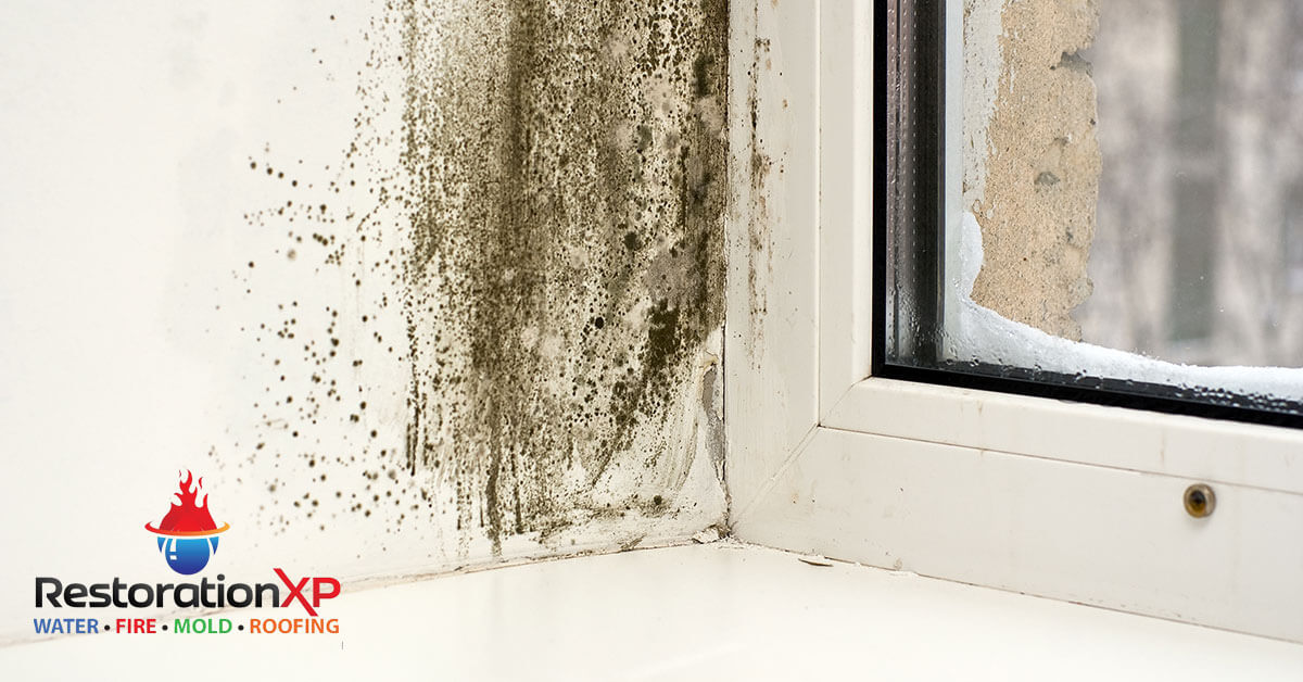 Certified mold restoration in Whitewright, TX