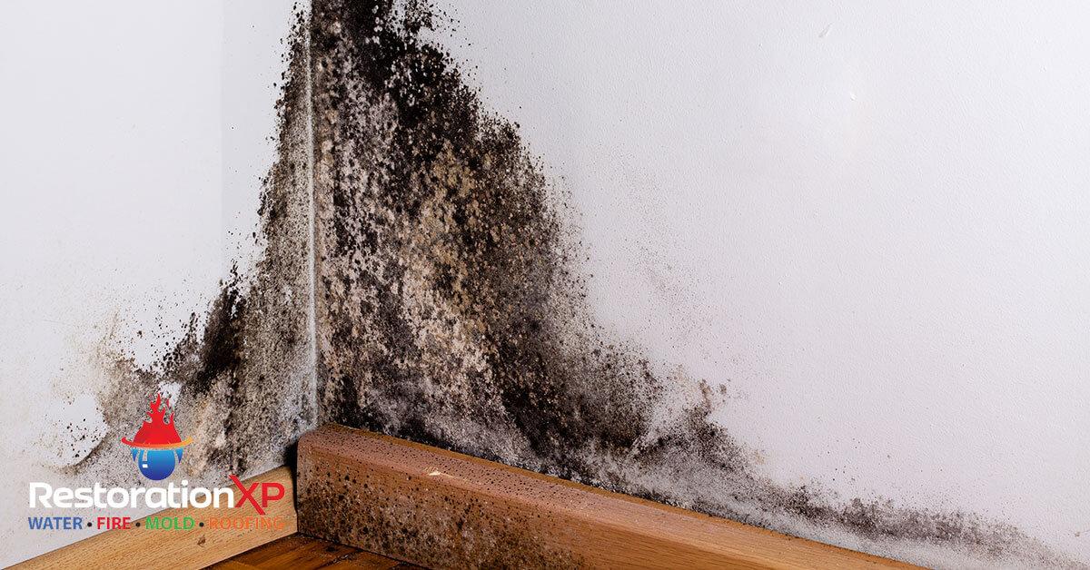 Certified mold remediation in Farmersville, TX
