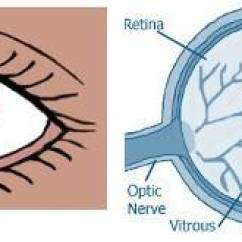 Parts Of The Eye Diagram And Function 92 Ford Ranger Wiring Health Online Course Module 1 Anatomy 2