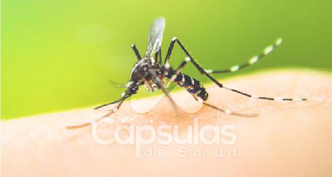 El-Dengue