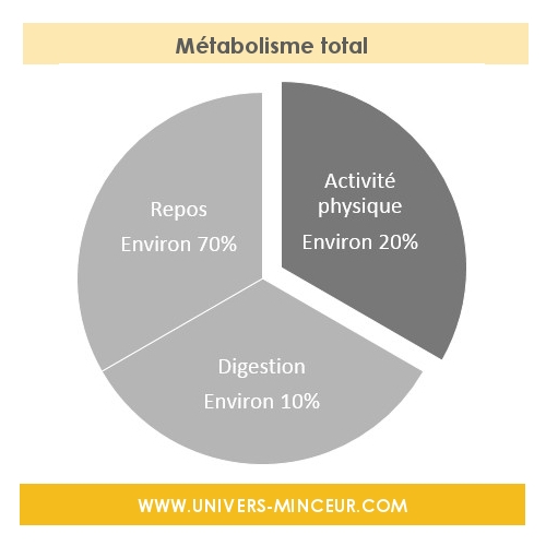 metabolisme total