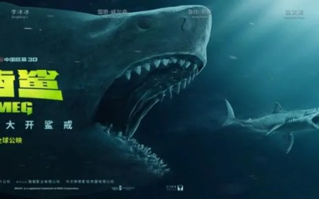 shark primo squalo