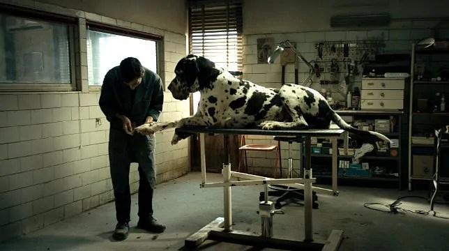 dogman film