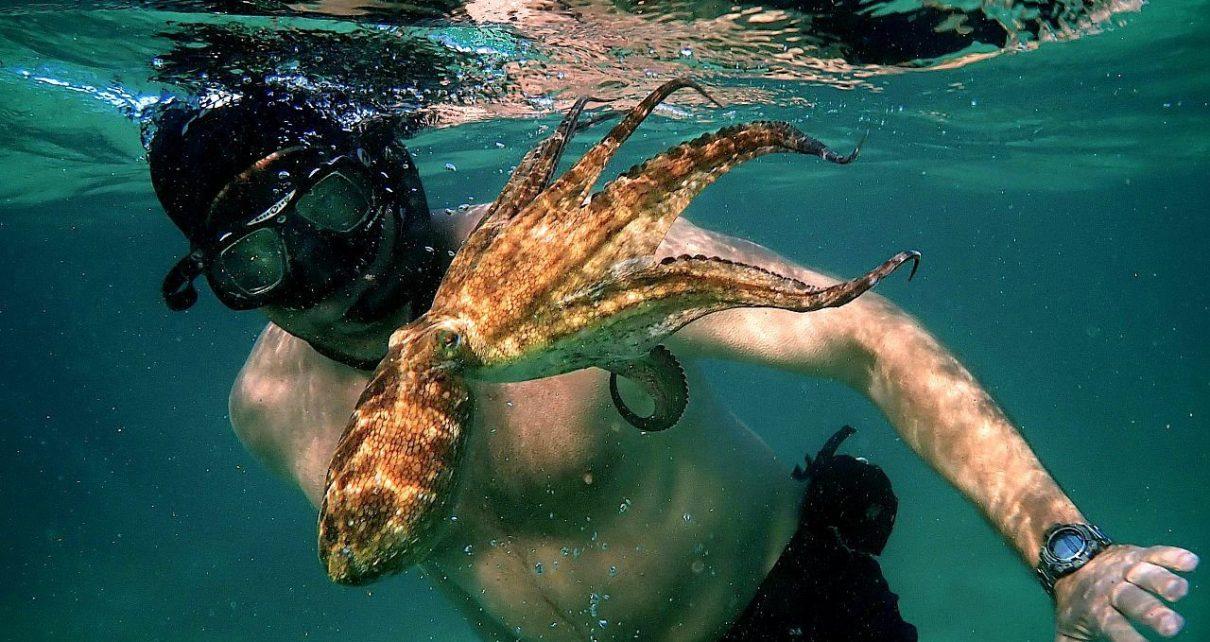 il mio amico in fondo al mare recensione