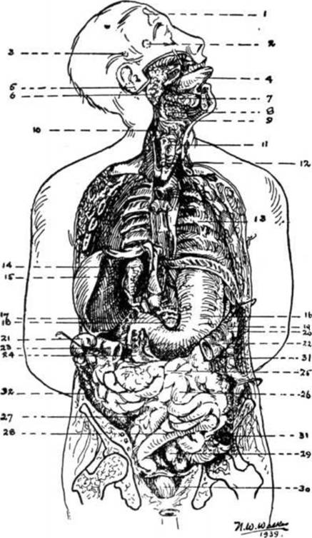 Norman W. Walker: DIET AND SALAD