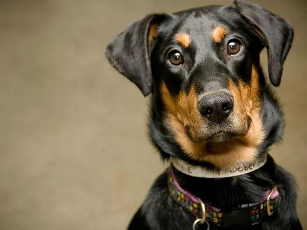 كيفية تربية الكلاب و الاعتناء بها فى المنزل ؟