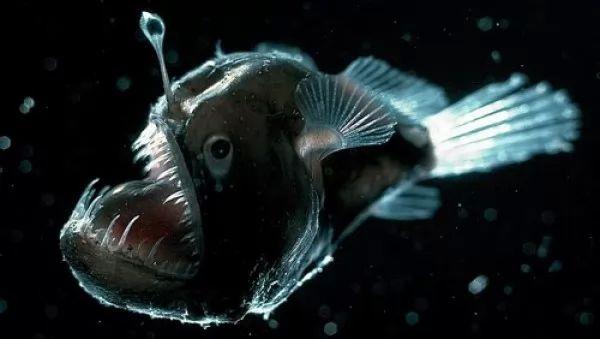 10 من اغرب المخلوقات البحرية فى العالم بالصور