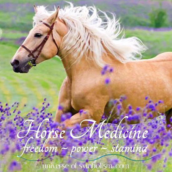 Horse Symbolism | Symbolic Meaning of Horse