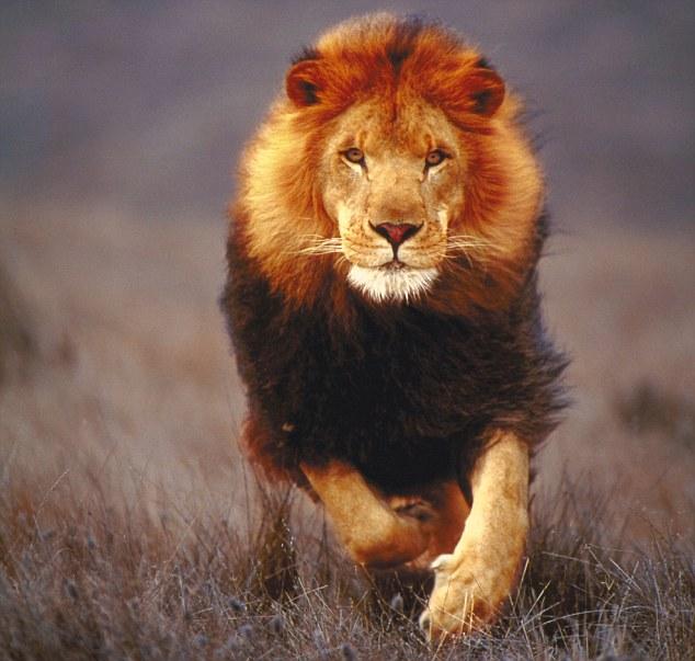 https://i0.wp.com/www.universeofsymbolism.com/images/lion-2.jpg