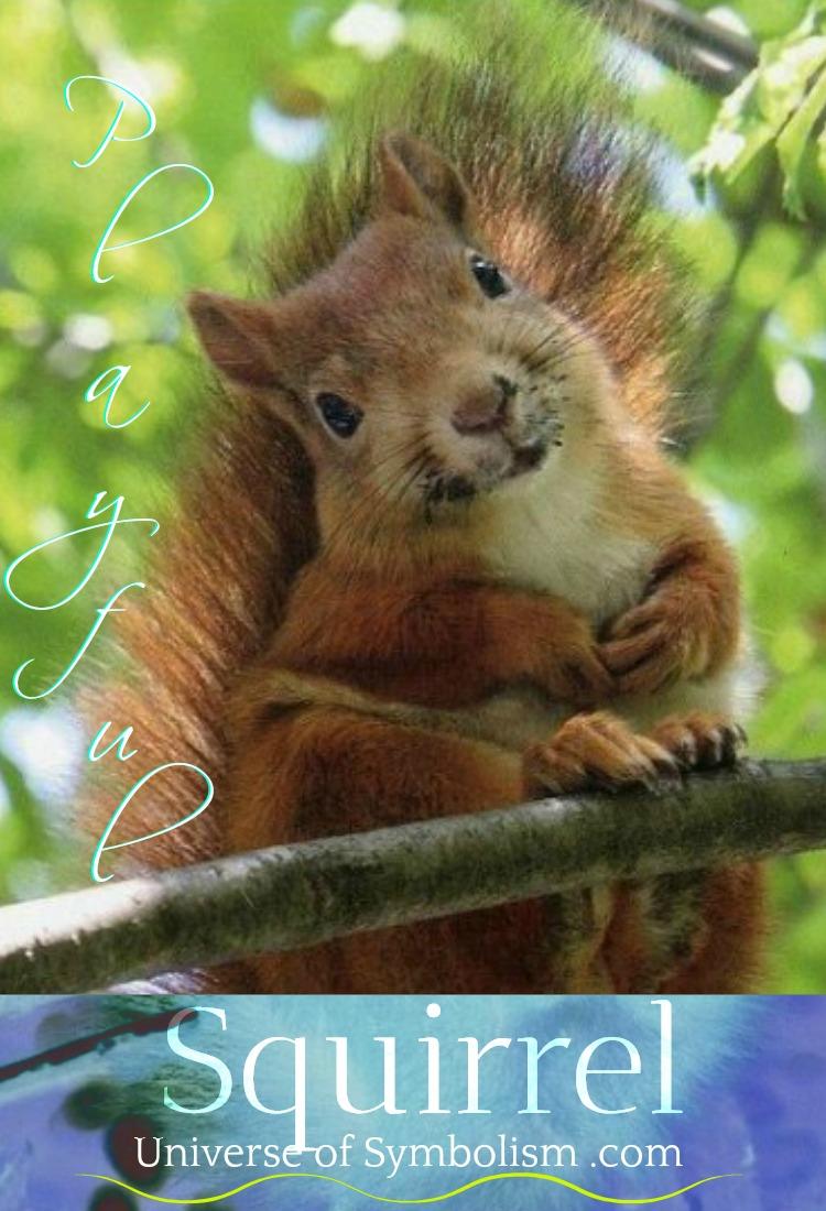 squirrel symbolism meaning squirrel