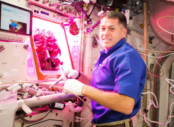NASA astronaut Shane Kimbrough harvesting lettuce from 'VEGGIE' on the International Space Station. Image: NASA