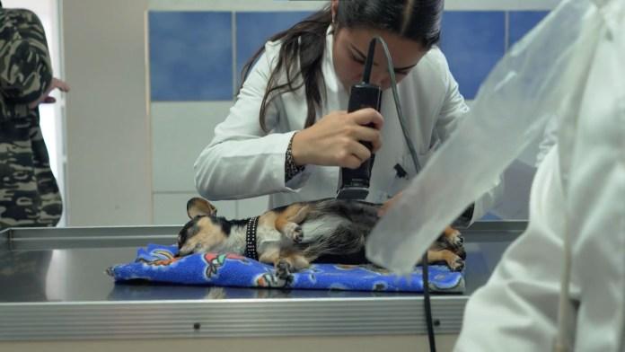 La Facultad de Medicina de Veterinaria de la UMSNH, acreditada por CIEES