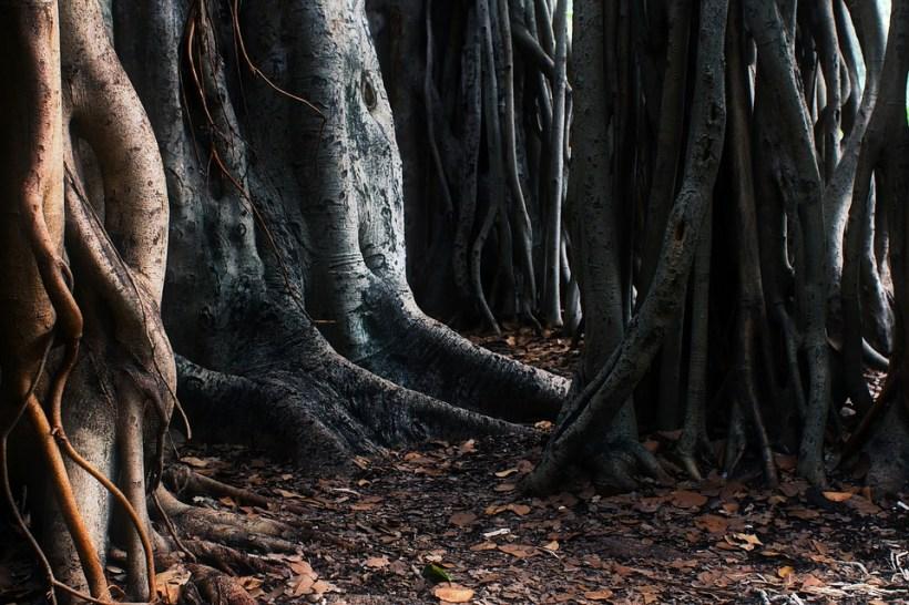 arbres-racines