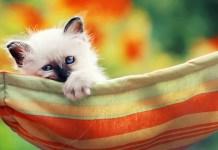 gatinhos quais os cuidados a ter