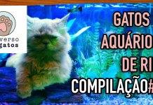 Gatos e aquários de rir COMPILAÇÃO 1