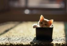 7 formas de entreter gatos sem gastar muito dinheiro