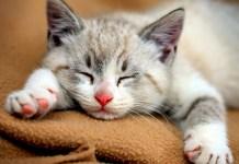 O ronronar dos gatos cura doenças