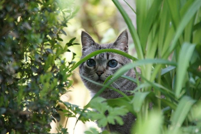 Venenos intoxicação comum em gatos