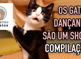 Os gatos dançando são um show [COMPILAÇÃO#1]