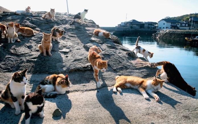 paraiso-dos-gatos-japao-1