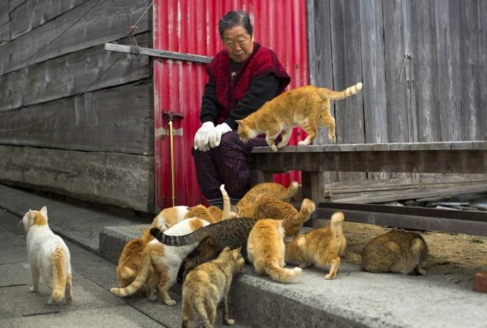 paraiso-dos-gatos-japao-10