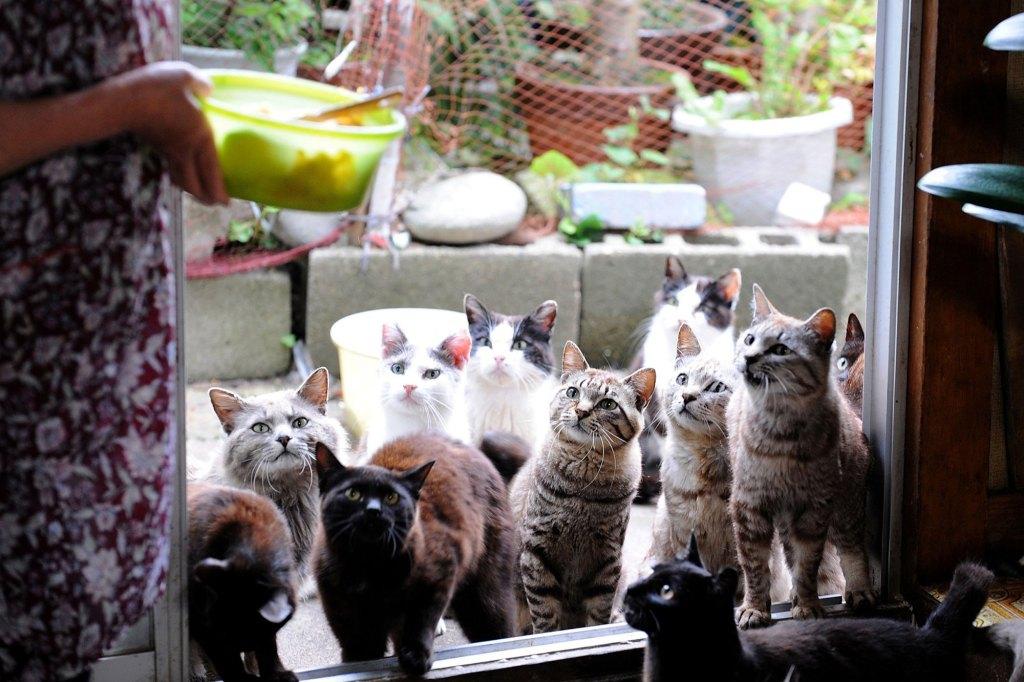 paraiso-dos-gatos-japao-5