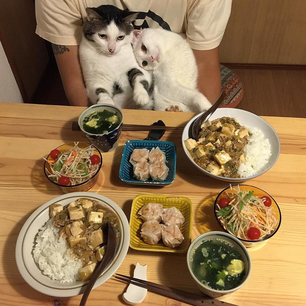 casal-fotogra-fa-gatos-ver-a-comer-naomiuno-12