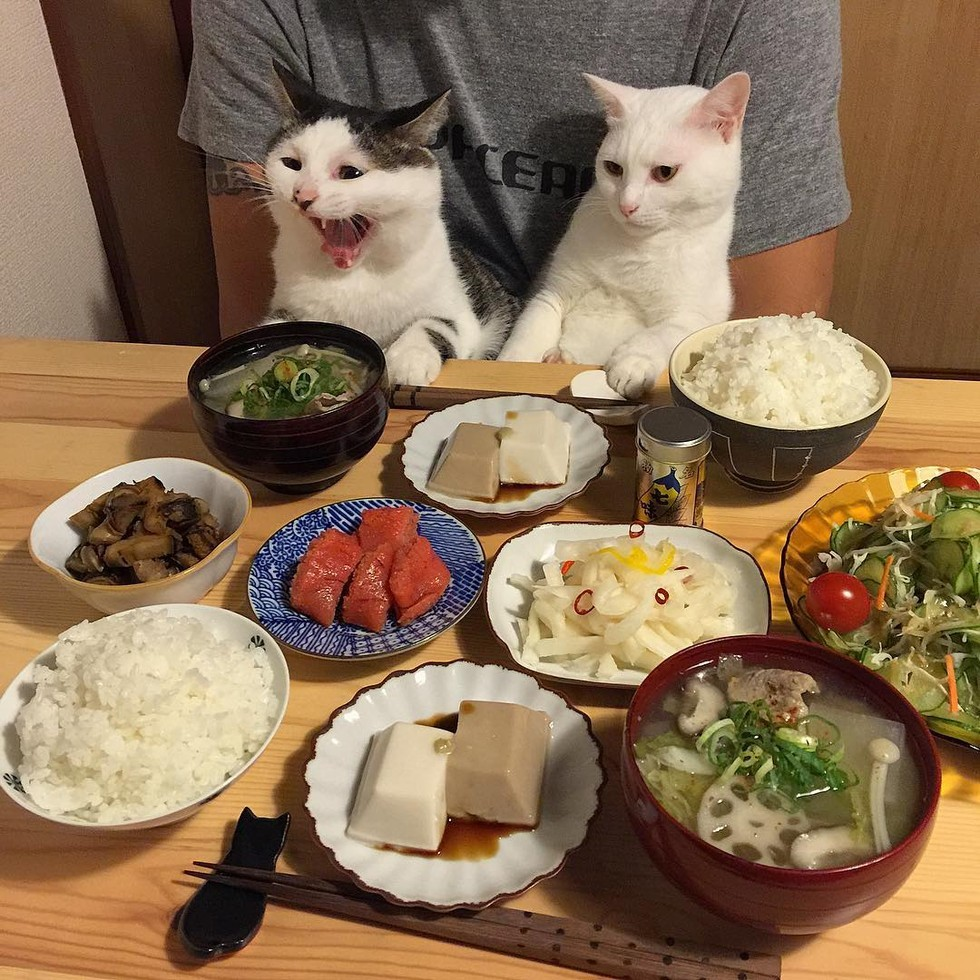 casal-fotogra-fa-gatos-ver-a-comer-naomiuno-4