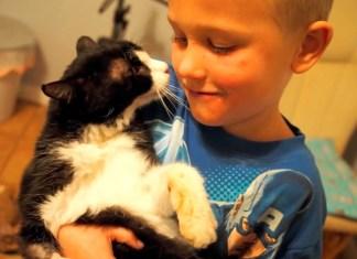 Gato com 20 anos encontrou uma casa e familia