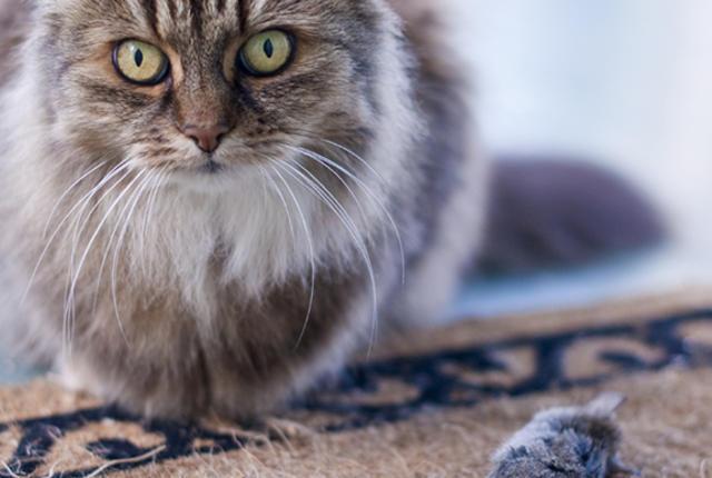9 Maneiras engraçadas de como o seu gato diz eu te amo