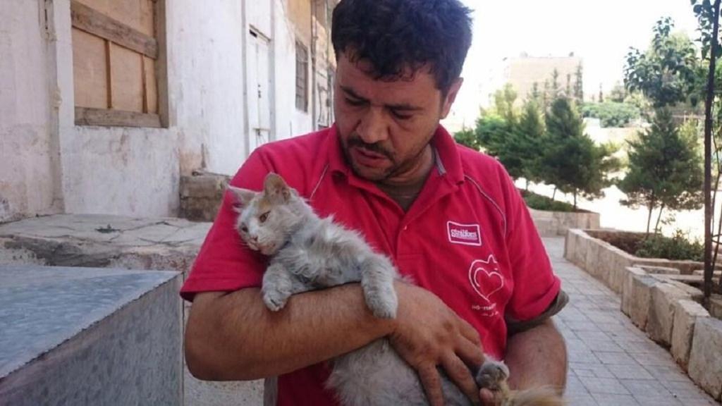 o-homem-que-cuida-dos-gatos-abandonados-em-aleppo-5