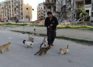 O homem que cuida dos gatos abandonados em Aleppo